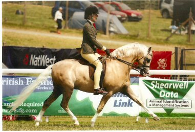 Netonhill Prince Bertie at Royal Welsh 2008